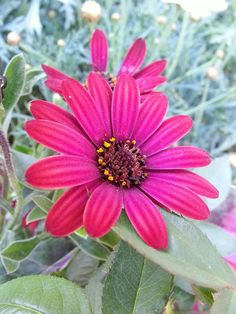flower, petal, fragility, freshness, nature, growth, flower head, beauty in nature, blooming, pollen, plant, close-up, leaf, outdoors, no people, day, zinnia, osteospermum