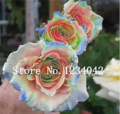 NEW! 200PC gorgeous gem rose seeds. Rare bonsai Flower Seeds in Home & Garden, Yard, Garden & Outdoor Living, Plants, Seeds & Bulbs | eBay