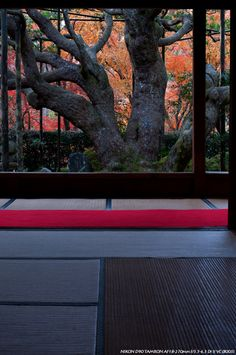 Garden view from the inside of Ohara Sanzen-in, temple, Housen-in, Kyoto, Japan 大原三千院