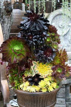Dramatic succulent combination - Cordova gardens
