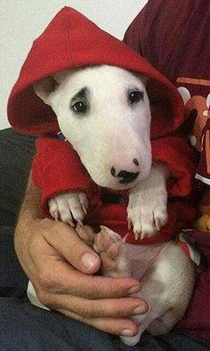 Little Red Riding Hood Bullie❤
