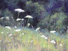 "Queen Anne's Lace by Kathy McDonnell Pastel ~ 12"" x 16"""