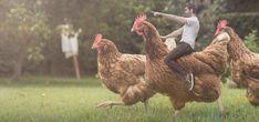 How a guy riding a chicken became an overnight street art sensation