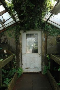 old greenhouse with water  basin