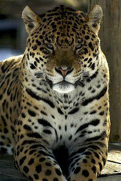 #pet#big#amazing#great#3colours