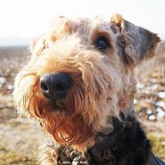 Whenever I see Berti like this I want to give him a kiss on his nose!  Can you understand me?