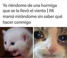 Funny Animal Memes, Animal Quotes, Stupid Funny Memes, Hilarious Animals, 9gag Funny, Funny Stuff, Blackpink Memes, Cat Memes, Funny Spanish Memes