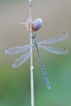 Dragonfly and Snail by Siegfried Tremel