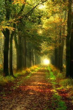 Forest Path, The Netherlands photo via unwritten