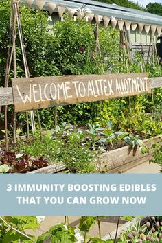 With the growing season well and truly on the way, we've put together a list of immunity boosting veg you can get growing now. Read the blog to find out more #growing #gardening #allotment #immunity #edibles #veg #greenhouse #glasshouse