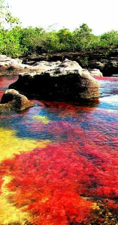 caño cristales colombia (aka river of 5 colors due to the bright colored moss) Beautiful Places To Travel, Beautiful World, Cool Places To Visit, Rainbow River, Paradise Places, Sunset Landscape, Solo Travel, Amazing Nature, Beautiful Landscapes