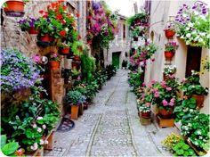 flores, flores... hay muchas flores