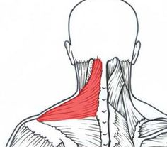 This easy myofascial release exercise will give you relief! Now anyone can treat their own tight shoulders and necks anywhere and anytime. # shoulder neck pain Myofascial Release: Tight neck and shoulder self-treatment! Tight Neck, Tight Shoulders, Fitness Workouts, Neck Exercises, Neck Stretches, Shoulder Mobility Exercises, Neck And Shoulder Exercises, Self Treatment, Massage Therapy