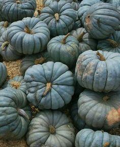 ~chalky teal pumpkin art