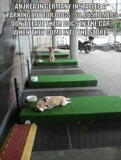 """A place to park your dog, while you shop at IKEA. Bring Fido on Saturday, and let him relax with other dogs at the """"IKEA dog parking lots. Animals And Pets, Funny Animals, Cute Animals, Le Chihuahua, Animal Pictures, Funny Pictures, Random Pictures, Amor Animal, Faith In Humanity Restored"""
