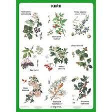 Výsledek obrázku pro lesní stromy Autumn Activities For Kids, Montessori Materials, Brain Training, Science And Nature, Botanical Illustration, Botany, Kids Learning, Education, Creative