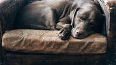 Best Dog Breeds for Anxiety Do You Wonder to Know Best Companion Dogs (List)Providing unconditional love, security and attention are some of the aspects that make a good dog help with anxiety. Some dog breeds are better in reducing anxiety than others. Best Senior Dog Food, Best Dog Food, Best Dogs, Cheap Cat Food, Cheap Pets, Dog Food Comparison, Dog Thoughts, Westie Puppies, Dog Food Brands