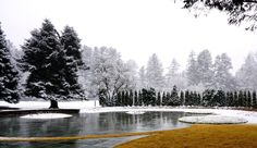 When snow falls in the garden at Stoneleigh! Photo by staff member Cody Hudgens. Snow Falls, Natural Garden, Acre, Home And Family, River, Outdoor, Outdoors, Outdoor Games, The Great Outdoors