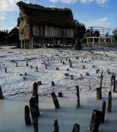 Prehistoric Pile dwellings around the Alps. 5000 to 500 B.C. Original piles Lac de Chalain with Neolithic dwelling reconstruction.