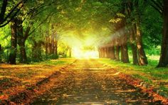 Beautiful Majestic Road with Sunshine on Canvas Pictures Wall Art Framed Prints Photos Modern Poster Nature Size: X X Photography Backdrops, Landscape Photography, Scenery Photography, Autumn Photography, Light Photography, Girl Faces, Tres Belle Photo, Autumn Park, Autumn Forest