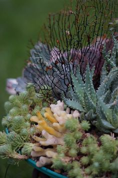 Canadian container gardens full of creativity | FineGardening
