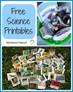 Free Science Printables via Montessori Nature Repinned by Apraxia Kids Learning. Come join us on Facebook at Apraxia Kids Learning Activities and Support- Parent Led Group.