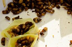 Eating beetles in Otavalo, Ecuador | Edible insects, Street food