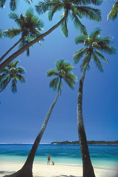 Yunuca Islands, Fiji with beautiful coconut trees in the white sand beach .... more cool pins at  http://www.Pinterest.com/jazevox