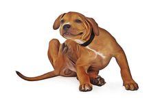 Traiter les problèmes de peau du chien par les remèdes naturels. En cas de démangeaisons ou d'allergie, comment soigner naturellement son chien.