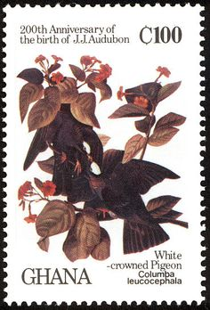 White-crowned Pigeon stamps - mainly images - gallery format