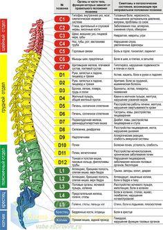 методы лечения остеохондроза на http://vahe-zdorovye.ru/?p=8935