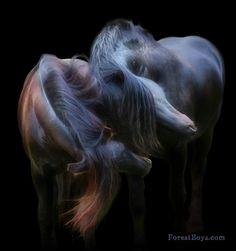 Friesian stallions Meike & Menno by Laura Zugzda