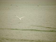 """""""A vida, manso lago azul algumas /Vezes, algumas vezes mar fremente, /Tem sido para nós constantemente /Um lago azul sem ondas, sem espumas, /Sobre ele, quando, desfazendo as brumas /Matinais, rompe um sol vermelho e quente, /Nós dois vagamos indolentemente, /Como dois cisnes de alvacentas plumas.   (Júlio Salusse, 1878-1948, poeta brasileiro)"""