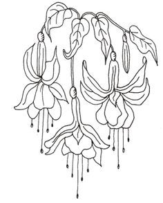 drawings of fuschias | Floral - Rubber Stamping, Scrapbooking, Papercrafting, Stamp Bug Ltd ...