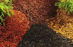 "Mulch: mulch is your friend! It keeps plant roots cool, prevents your soil from crusting, and helps to minimize evaporation and weed growth. Organic mulches such as bark or wood grindings should be applied 2""-4"" deep. Inorganic mulches, such as gravel or rocks, should be applied 2""-3"" deep. Beware though, surrounding plants with rocks will make the area hotter so make sure your plant can handle it."