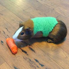 large guinea pig sweaters by squeakysweaters on Etsy,