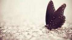 бабочка, поверхность, крылья, узор