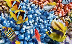 barreira-de-corais.jpg