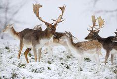 animals in winter | ... Братья наши меньшие » 01o winter animals 12.10