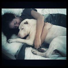 Pitbulls...are love. http://media-cache8.pinterest.com/upload/166773992420597731_j7s2E6jK_f.jpg reneealyce love