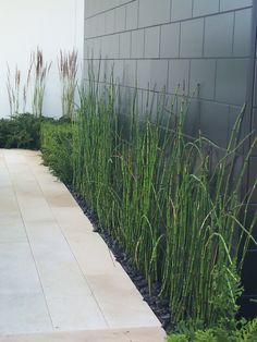 Constrained use of planting, excellent use of line in plant selection. Equisetum, Calamagrostis