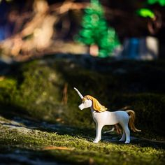 Unicorns exist. #nofilter #unicorn #playmobil #nature #photosofinstagram #truth #perspective #instaphoto