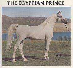 The Egyptian Prince