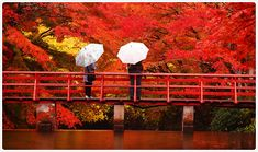 When someones tells about momiji we can imagine about Autumn in Japan! Yeah we can go to see kouyou in Autumn in Japan! It s super wonderful!