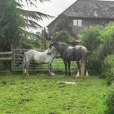 Friendship. #horses #ponies #Shobdon #Herefordshire #walk1000miles2017