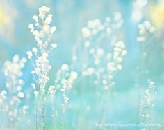 Dried Grass Weeds -Blue Turquoise White  -Nature Abstract Spring Summer Photograph -Home Decor  -Wall Art -Fine Art Print on Etsy, $30.00