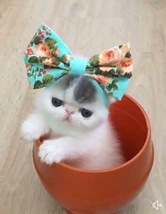 So so cute kitty
