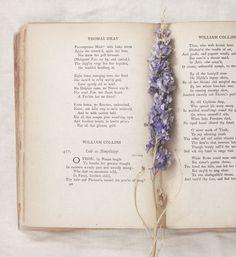 Secret messages, flowers, and forbidden love…  The Reading Lessons http://www.amazon.com/Reading-Lessons-Carole-Lanham-ebook/dp/B00HRKGSO8/ref=tmm_kin_swatch_0?_encoding=UTF8&sr=&qid=