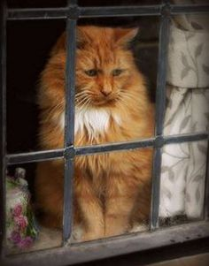 This beautiful kitty looks a bit sad…… Do you think he wants to go outside?