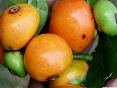 Button Mangosteen Fruit